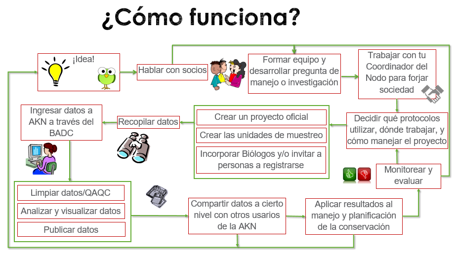 Work Flow graphic for AKN in Spanish.